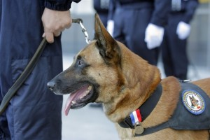 Colorado Criminal Law - Supreme Court Ends Unlawful Drug Dog Sniff Searches